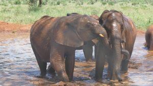 Ndotto (links) und Mbegu (c) Sheldrick Wildlife Trust