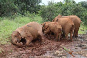 Sattao und Roho (c) Sheldrick Wildlife Trust