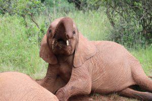 Tamiyoi (c) Sheldrick Wildlife Trust