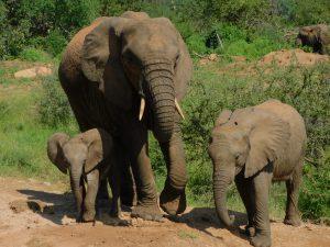 Lili, Loijuk und Kama (c) Sheldrick Wildlife Trust