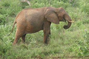 Lualeni (c) Sheldrick Wildlife Trust