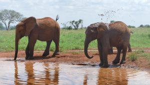 Mashariki und Embu (c) Sheldrick Wildlife Trust