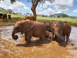 Ndotto und Rorogoi (c) Sheldrick Wildlife Trust