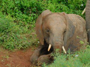 Pare beim Spielen (c) Sheldrick Wildlife Trust