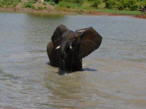 Tusuja spielt im Wasser (c) Sheldrick Wildlife Trust