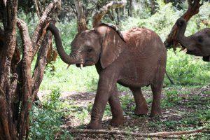 Dololo (c) Sheldrick Wildlife Trust
