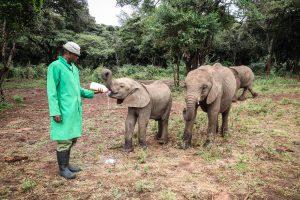 Roho und Kiasa (c) Sheldrick Wildlife Trust