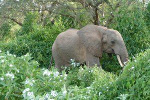 Chemi Chemi (c) Sheldrick Wildlife Trust