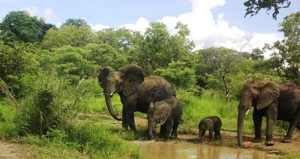 News aus dem Thuma Waldreservat
