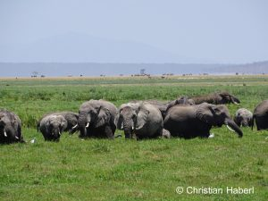 Elefantenfamilie im Sumpf