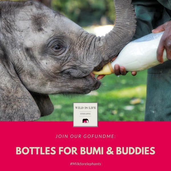SPENDENAUFRUF ZIMBABWE ELEPHANT NURSERY