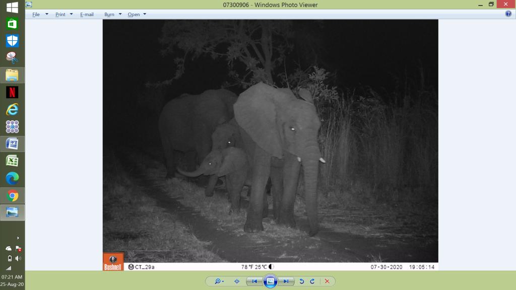 Unsere kleinste Kuhherde mit vier Mitgliedern, inklusive einem Kälbchen. (c) Wildlife Action Group