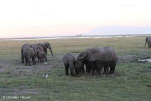 Elefantenfamilie in den Sümpfen