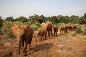 Die Waisen im Juli 2020 (c) Sheldrick Wildlife Trust