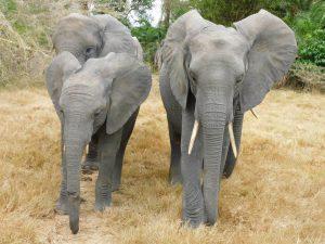 Enkesha mit ihren Freunden (c) Sheldrick Wildlife Trust
