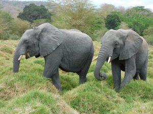 Faraja und Ziwa (c) Sheldrick Wildlife Trust