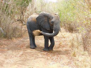 Faraja (c) Sheldrick Wildlife Trust