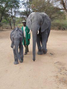 Luggard und Murera mit ihrem Keeper (c) Sheldrick Wildlife Trust