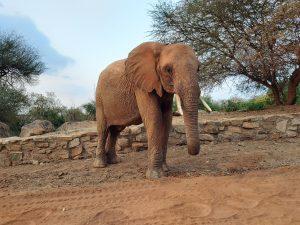 Tundani (c) Sheldrick Wildlife Trust