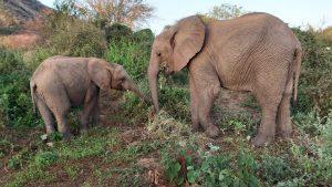 Dololo und Sities (c) Sheldrick Wildlife Trust
