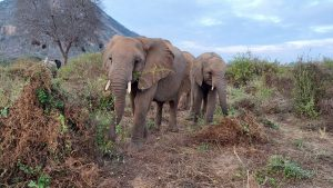 Galla und Kuishi (c) Sheldrick Wildlife Trust