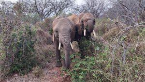 Karisa und Olsekki (c) Sheldrick Wildlife Trust