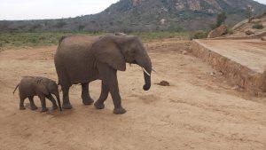 Loijuk mit Lili (c) Sheldrick Wildlife Trust