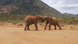 Sapalan und Namalok (c) Sheldrick Wildlife Trust