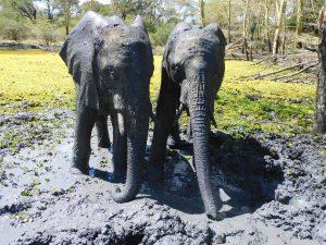 Alamaya und Mwashoti (c) Sheldrick Wildlife Trust