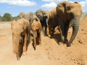 Enkesha und Sonje (c) Sheldrick Wildlife Trust
