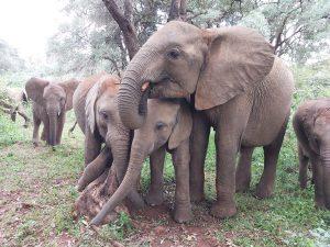Larro, Roho, Maisha und Naleku (c) Sheldrick Wildlife Trust