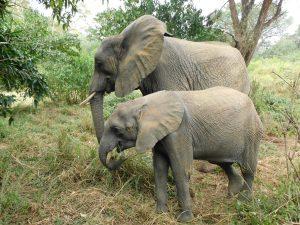 Luggard und Murera (c) Sheldrick Wildlife Trust