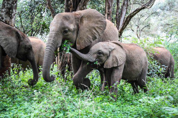 Maisha und Roho (c) Sheldrick Wildlife Trust