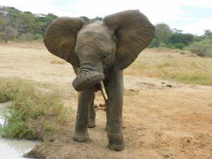 Mwashoti (c) Sheldrick Wildlife Trust
