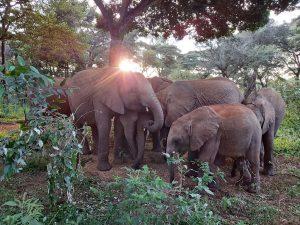 Die Waisen (c) Sheldrick Wildlife Trust