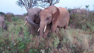 Garzi und Barsilinga (c) Sheldrick Wildlife Trust