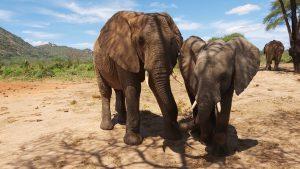 Kibo und Tusuja (c) Sheldrick Wildlife Trust