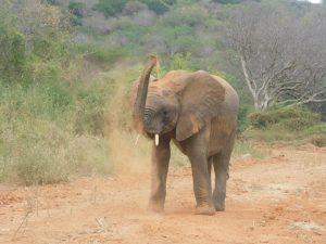 Mundusi (c) Sheldrick Wildlife Trust