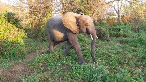 Namalok (c) Sheldrick Wildlife Trust