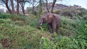 Ndiwa (c) Sheldrick Wildlife Trust