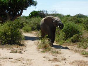 Oltaiyoni (c) Sheldrick Wildlife Trust
