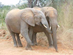 Turkwel und Suguta (c) Sheldrick Wildlife Trust