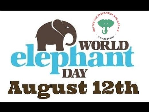 Am 12. August ist Welt-Elefanten-Tag