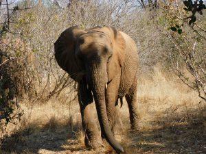 Kalama (c) Sheldrick Wildlife Trust