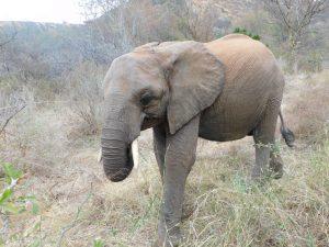 Karisa (c) Sheldrick Wildlife Trust