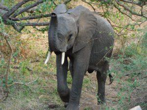 Kithaka schiebt Wache (c) Sheldrick Wildlife Trust