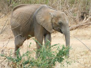 Luggard (c) Sheldrick Wildlife Trust