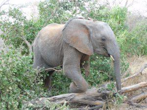 Malkia im Busch (c) Sheldrick Wildlife Trust