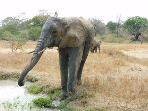 Murera (c) Sheldrick Wildlife Trust