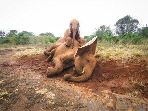 Roho auf Maisha (c) Sheldrick Wildlife Trust